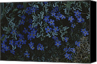 "\""forget Me Not Flowers\\\"" Canvas Prints - Alpine Forget-me-nots Wildflowers Canvas Print by Raymond Gehman"