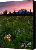 Alpine Canvas Prints - Alpine Garden Canvas Print by Mike  Dawson