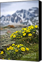 Outdoor Canvas Prints - Alpine meadow  Canvas Print by Elena Elisseeva