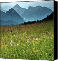 Mountain Scene Canvas Prints - Alpine Meadow Canvas Print by Terry Roberts Photography