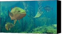 Fish Canvas Prints - Alternate Perspective Canvas Print by Dieter Carlton