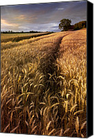 Verticle Canvas Prints - Amber Waves of Grain Canvas Print by Debra and Dave Vanderlaan