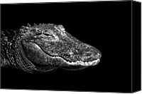Animal Head Shot Canvas Prints - American Alligator Canvas Print by Malcolm MacGregor