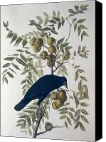 Berry Canvas Prints - American Crow Canvas Print by John James Audubon