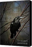 Black Birds Canvas Prints - American Crow Canvas Print by Lois Bryan