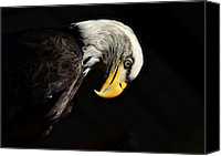 Bald Eagle Canvas Prints - American Pride  Canvas Print by Saija  Lehtonen