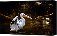 Saint Louis Canvas Prints - American White Pelican Canvas Print by Bill Tiepelman