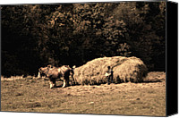 Amish Canvas Prints - Amish Hay Wagon Canvas Print by Tom Mc Nemar