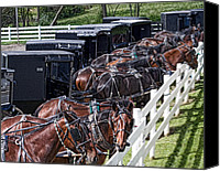 Horse And Buggies Canvas Prints - Amish Parking Lot Canvas Print by Tom Mc Nemar