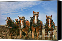 Kansas City Canvas Prints - Amish Plow Day Canvas Print by Crystal Nederman