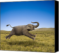 Elephant Running Canvas Prints - An Elephant Galloping In Freedom And Joy Canvas Print by John Lund