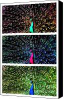 Triptych Canvas Prints - An Explosion of Color Canvas Print by Susanne Van Hulst