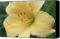 Day Lily Flowers Canvas Prints - An Invitation Canvas Print by Robin Konarz