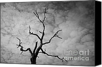 Grayscale Canvas Prints - Ancient Oak Tree No. 3 Canvas Print by Dave Gordon