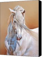 Horse Drawings Canvas Prints - Andalusian Canvas Print by Elena Kolotusha