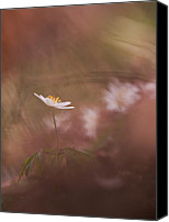 Rikard Olsson Canvas Prints - Anemone in red Canvas Print by Rikard  Olsson