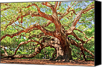 Island Photo Canvas Prints - Angel Oak - Charleston SC  Canvas Print by Drew Castelhano