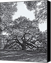 Black And White Pyrography Canvas Prints - Angel Oak Canvas Print by Dave Stegmeir