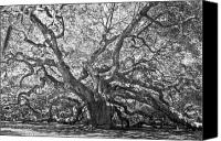 Low Country Canvas Prints - Angel Oak II Canvas Print by Drew Castelhano