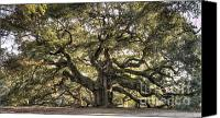 Big Tree Canvas Prints - Angel Oak Tree Live Oak  Canvas Print by Dustin K Ryan