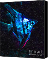 Angel Fish Canvas Prints - Angelfish Canvas Print by Wingsdomain Art and Photography