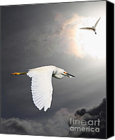 Snowy Egrets Canvas Prints - Angels of The Night Sky Canvas Print by Wingsdomain Art and Photography