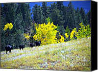 Black Angus Canvas Prints - Angus Train Canvas Print by Dani Stites