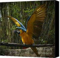 Birds Pyrography Canvas Prints - Animal Kingdom - Flights Of Wonder Canvas Print by AK Photography