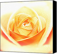 White Rose Canvas Prints - Anniversary Rose Canvas Print by Kristin Kreet