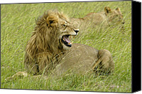 Animals Canvas Prints - Annoyed Canvas Print by Michele Burgess