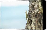 Brandon Tabiolo Canvas Prints - Anole Lizard Canvas Print by Brandon Tabiolo - Printscapes