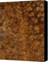 Scanner Canvas Prints - Another Touch Of Fall Canvas Print by Richard Rizzo
