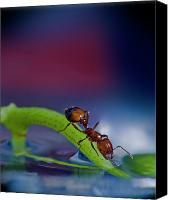 Ant Canvas Prints - Ant in a colorful world Canvas Print by Bob Rasulev