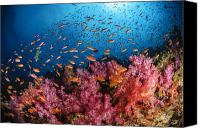Ocean Photography Canvas Prints - Anthias Fish And Soft Corals, Fiji Canvas Print by Todd Winner