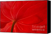Ranjini Kandasamy Canvas Prints - Anthurium 2 Canvas Print by Ranjini Kandasamy