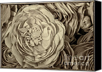 Decorative Floral Canvas Prints - Antique Ranunculus Canvas Print by Joan Carroll
