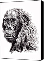 Humanlike Canvas Prints - Ape  Canvas Print by Debbie Jew