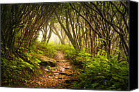 Wet Canvas Prints - Appalachian Hiking Trail - Blue Ridge Mountains Forest Fog Nature Landscape Canvas Print by Dave Allen