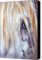 Horse Drawings Canvas Prints - Appaloosa Canvas Print by Elena Kolotusha