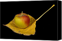"\""striking Photography\\\"" Canvas Prints - Apple Harvest Autumn Leaf Canvas Print by James Bo Insogna"