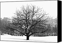 Big Apple Photo Canvas Prints - Apple tree in winter Canvas Print by Elena Elisseeva