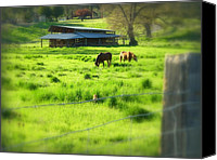 Barbed Wire Fences Canvas Prints - Applegate Country Scene Canvas Print by Cindy Wright