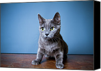 Cat Canvas Prints - Apprehension Canvas Print by Square Dog Photography