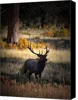 Elk Canvas Prints - Approach Canvas Print by Emily Stauring