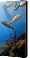 Jenkinsons Aqaurium  Canvas Prints - Aquarium 20 Canvas Print by Joyce StJames