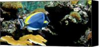 Jenkinsons Aqaurium  Canvas Prints - Aquarium 39 Canvas Print by Joyce StJames
