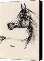 Horse Drawings Canvas Prints - Arabian Horse Drawing 26 Canvas Print by Angel  Tarantella