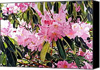 Most Sold Canvas Prints - Arboretum Rhododendrons Canvas Print by David Lloyd Glover