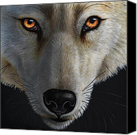 Jurek Zamoyski Canvas Prints - Arctic Wolf Canvas Print by Jurek Zamoyski
