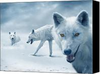 Featured Photo Canvas Prints - Arctic Wolves Canvas Print by Mal Bray